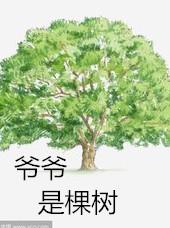 爷爷是棵树